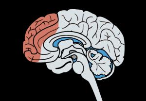 ADHDの脳の原因はどこにあるのか、イラストでご紹介します。